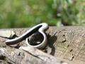 b-ring1